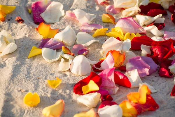 Flower-Petal-Walkway-Perdido-Key_resize
